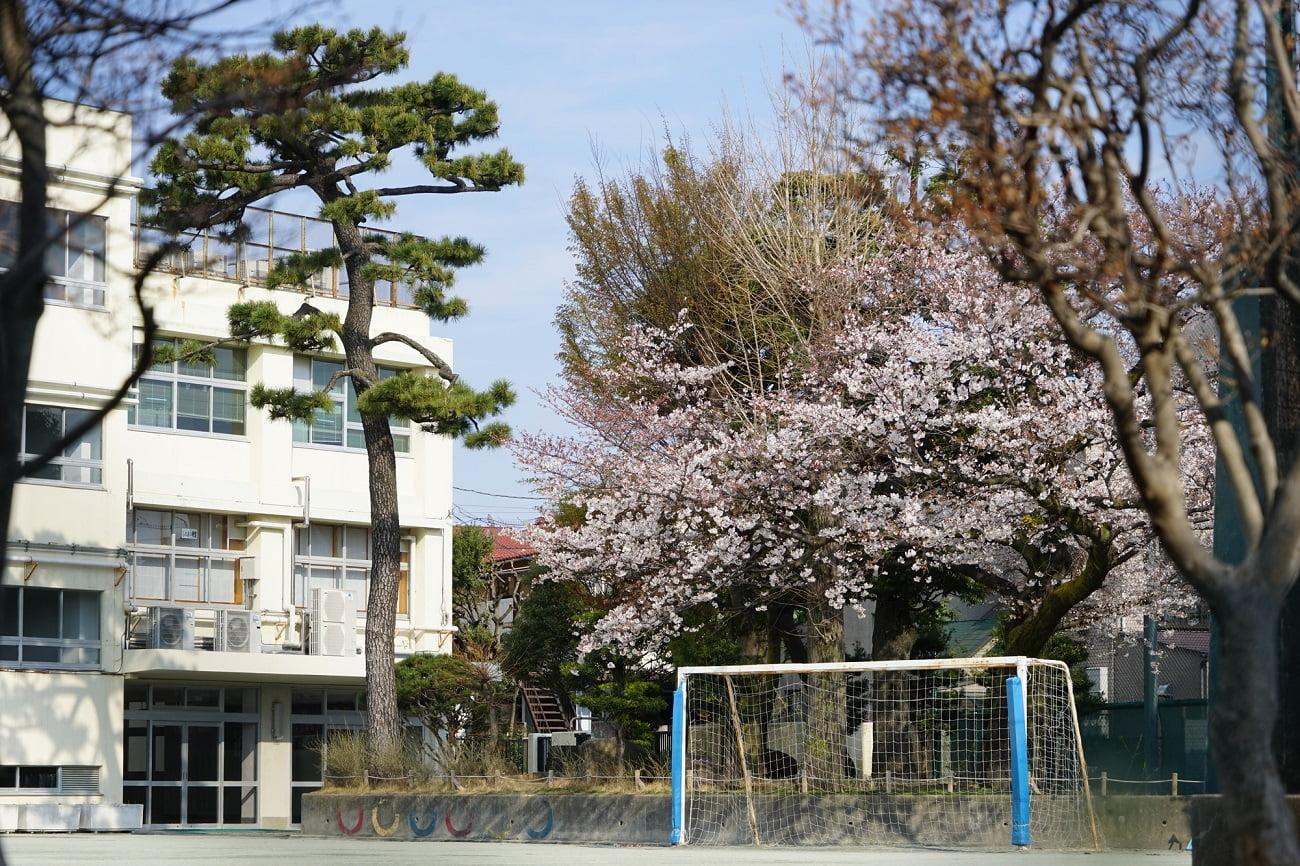 記事世田谷区立北沢小学校 閉校のイメージ画像