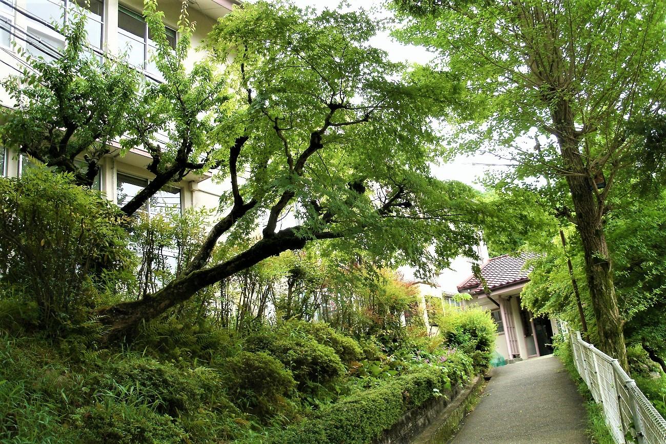 記事西宮市立船坂小学校 閉校のイメージ画像