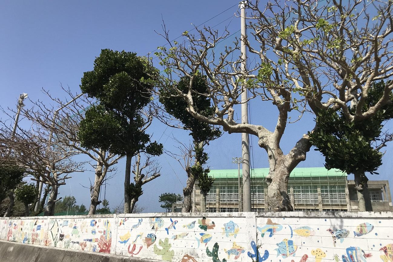 記事恩納村立安富祖中学校 閉校のイメージ画像