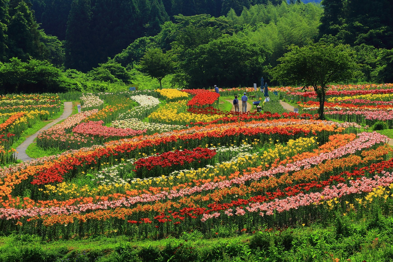 記事南くりこま高原 一迫ゆり園 閉園のイメージ画像