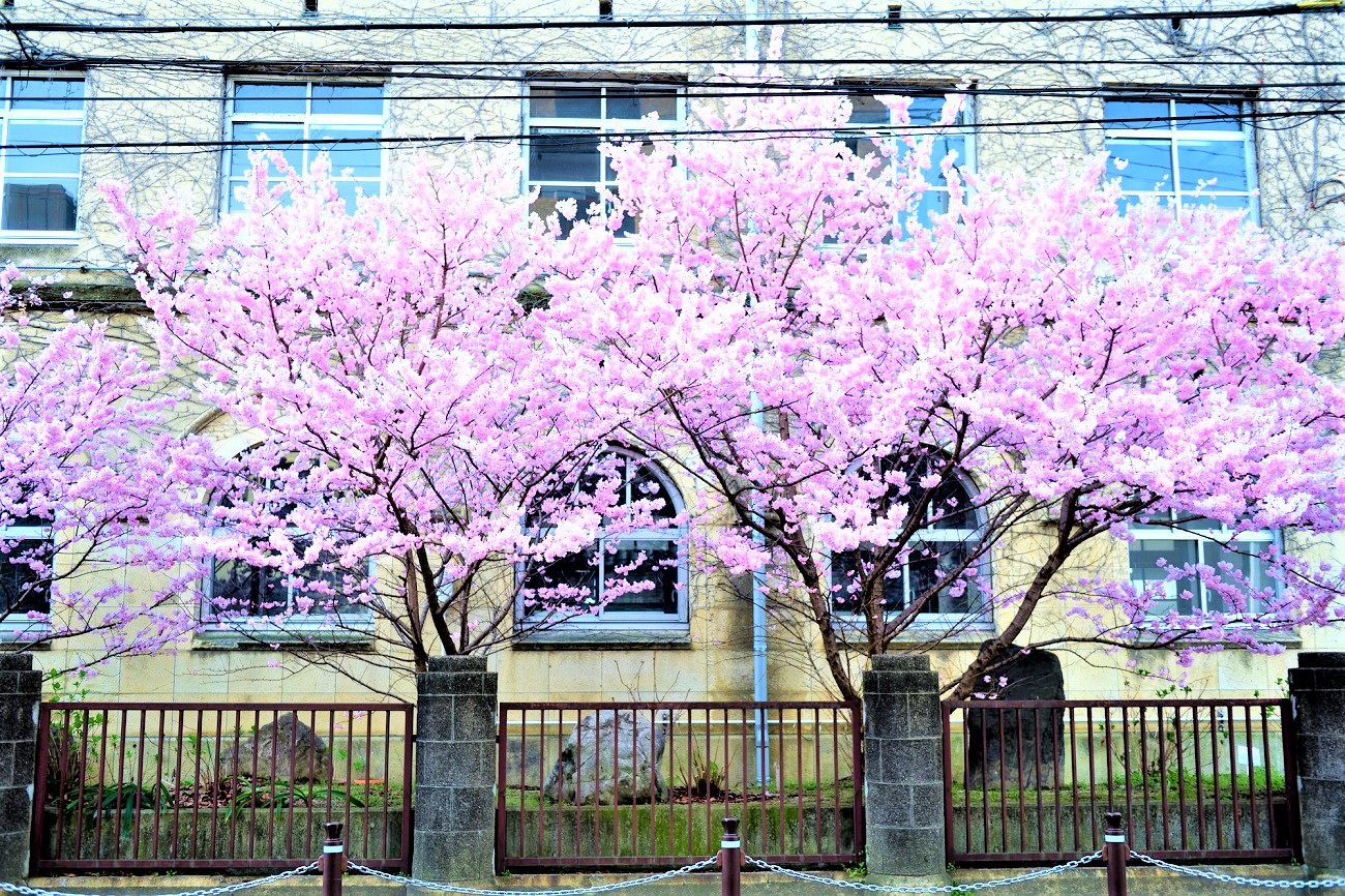 記事京都市立成徳中学校 閉校のイメージ画像